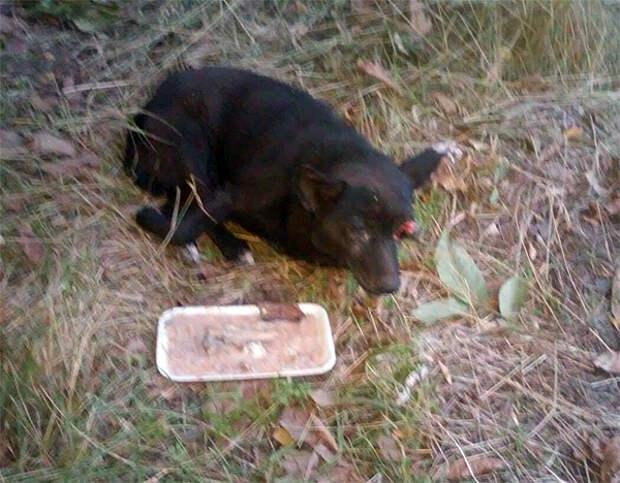 Волонтёры спасают пожилую собачку, выброшенную на обочину жизни…