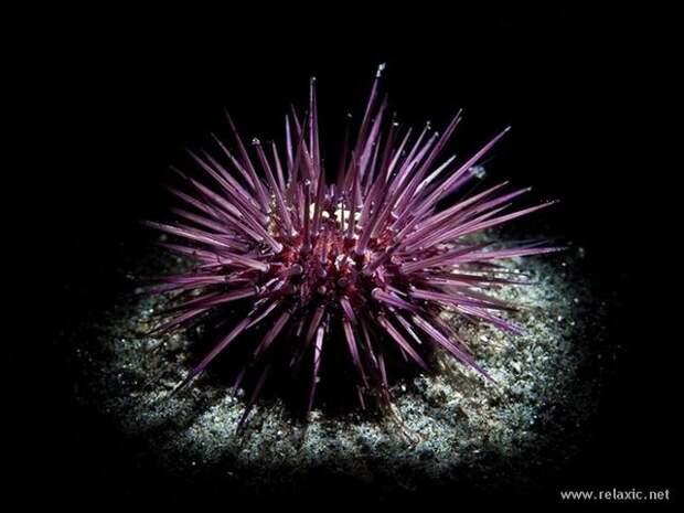 underwater_030