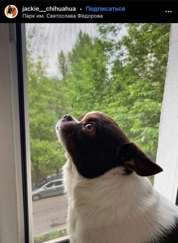 Фото дня: посиделки у окна в Бескудникове