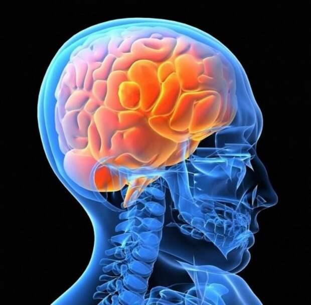 15. Наш мозг по большей части состоит из воды  тело, человек, шокирующие факты