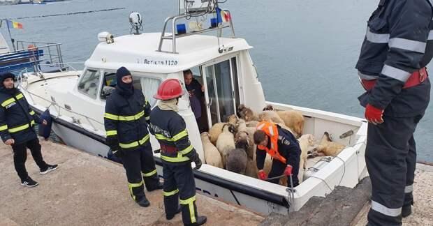 В Чёрном море утонули 14 тысяч овец