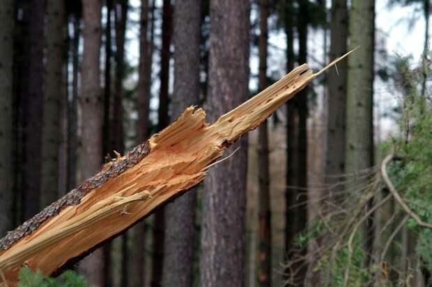 11-летнего мальчика убило деревом в Удмуртии