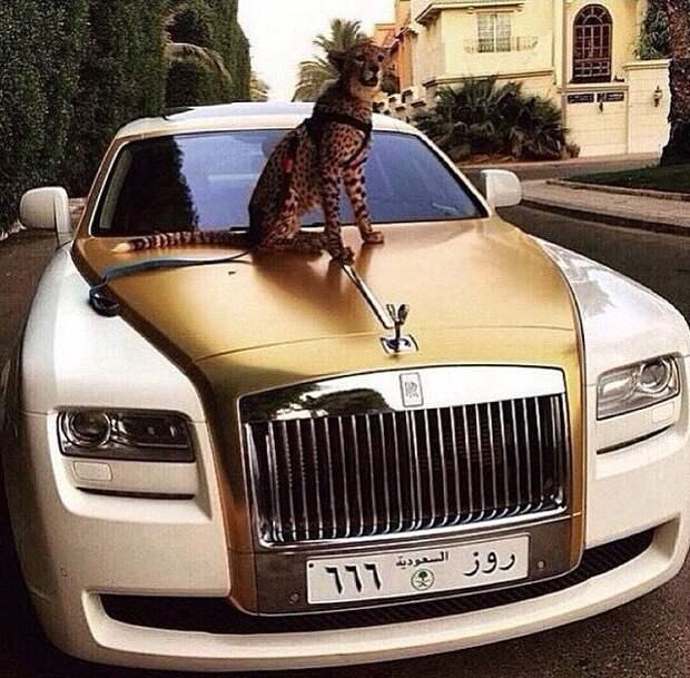 Богатенькие детки из Саудовской Аравии хвастаются роскошью Саудовская Аравиия, богатые люди, дети, золотая молодежь, мажоры