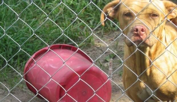 Время потрачено не зря! Этой женщине понадобилось два года, чтобы спасти животное от нечеловеческого обращения