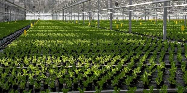 За рубежом вырос спрос на продукцию агропромышленного комплекса Москвы