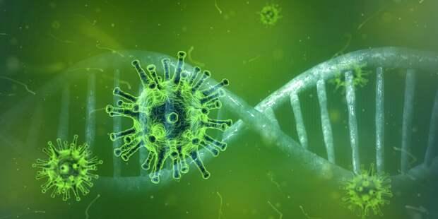 Учёные заявили, что не все антитела способны защитить от коронавируса