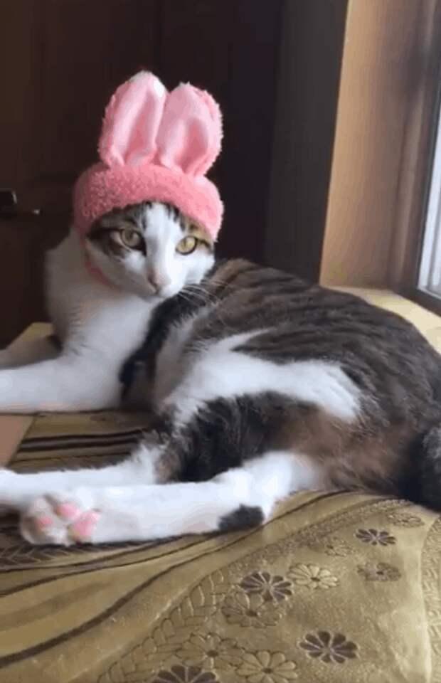 Вот герой нашей истории крупным планом. И не спрашивайте, почему он в шапке домашний питомец, животные, коты, лапки, художник, япония