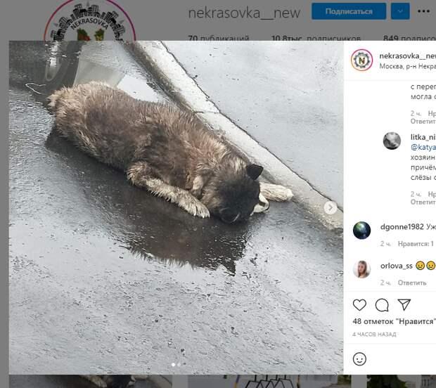 Мертвого хаски нашли на 2-й Вольской