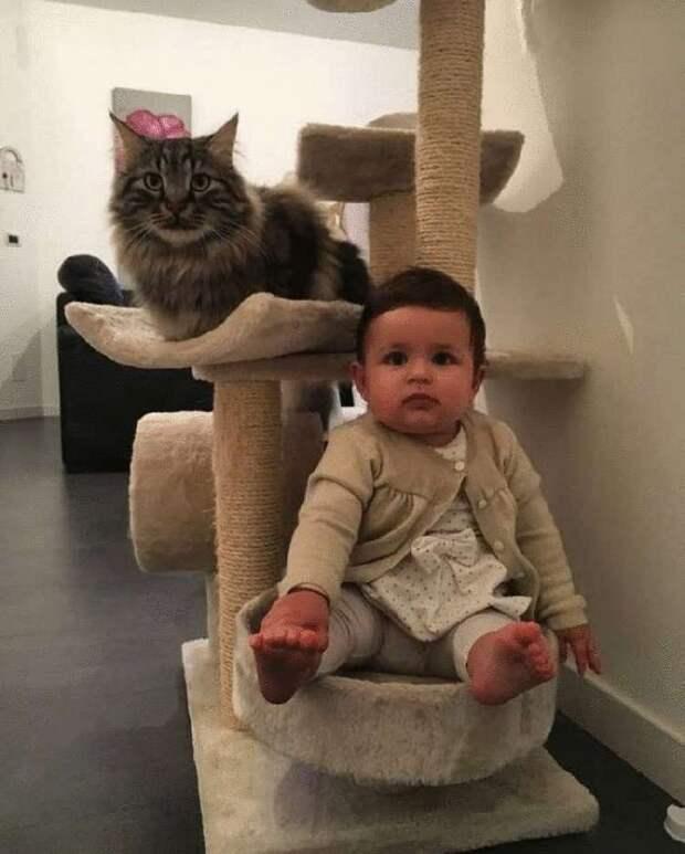 Приблудившийся на ферму кот, стал второй мамой для ребёнка хозяйки