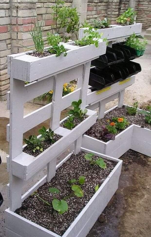 Новые подходы к выращиванию овощей и фруктов в саду