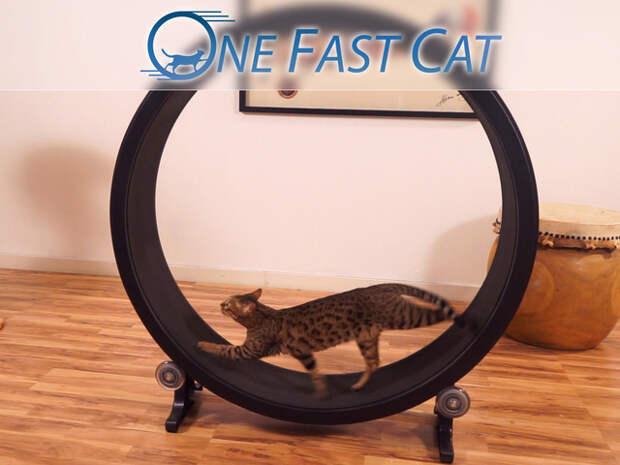 Высвобождаем энергию домашней кошки. На Кикстартере собирают средства на тренажер для котов.