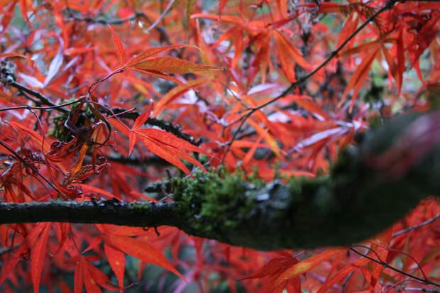Осень. (Kevin Pratt)