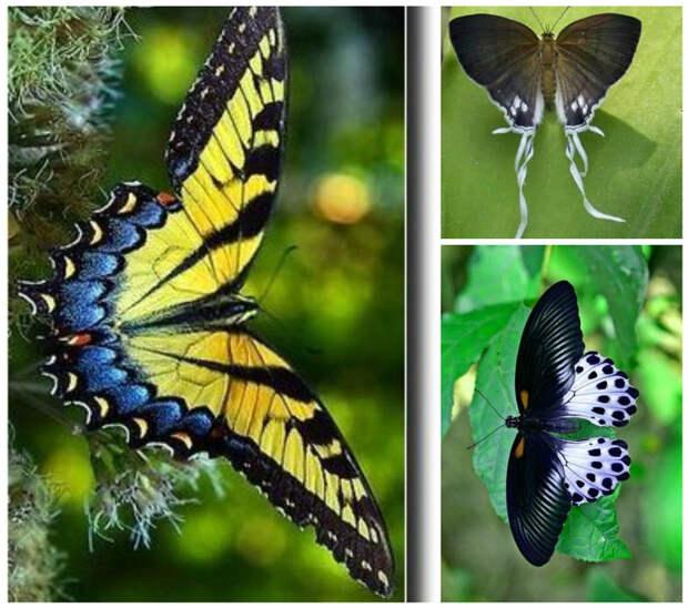 Самец бабочки шелкопряда может обнаружить запах самки при содержании 5 молекул феромона в 10 мм воздуха. бабочки, интересное, красота, насекомые