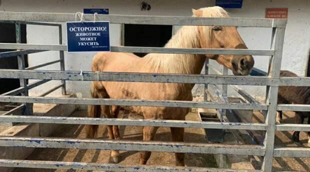 Зооуголок Симферополя закрыли после инцидента с лошадью