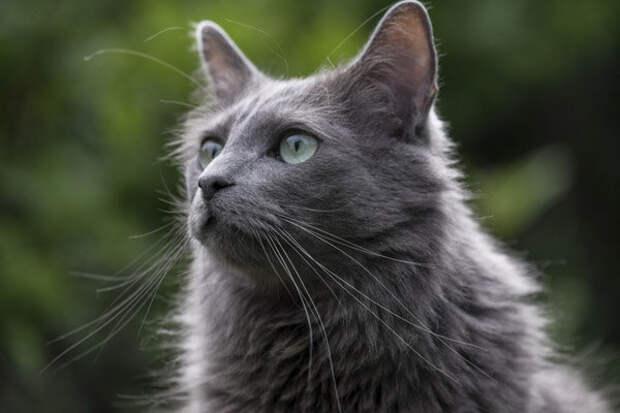 5 самых ласковых и добрых пород кошек в мире. Часть 1