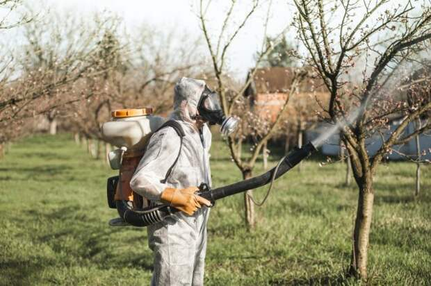 Защита абрикоса