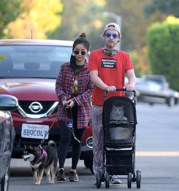 Маколей Калкин выгуливает кота в коляске