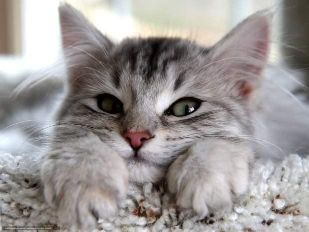 Кошки — фамильяры 21 века: как домашние любимцы спасают нас от бед ...