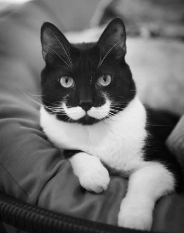 Обаятельные красавцы — котики, которые от природы получили всё. И «изюминку» сверху!