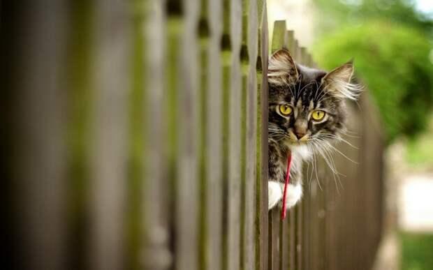А Вы умеете использовать котов в хозяйстве?