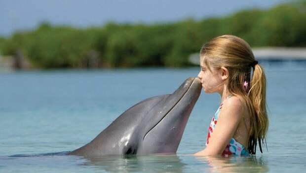 Почему дельфины не создали свою цивилизацию?