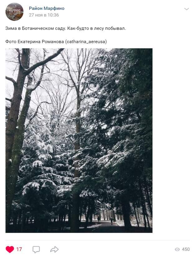 Фото дня: в Главный ботанический сад пришла зима