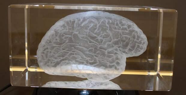Мы теряем мозг: почему выживает глупейший