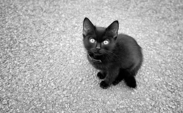 Всемирный День кошек