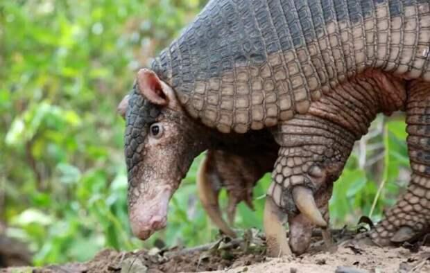 Как выглядит самое зубастое животное в мире?