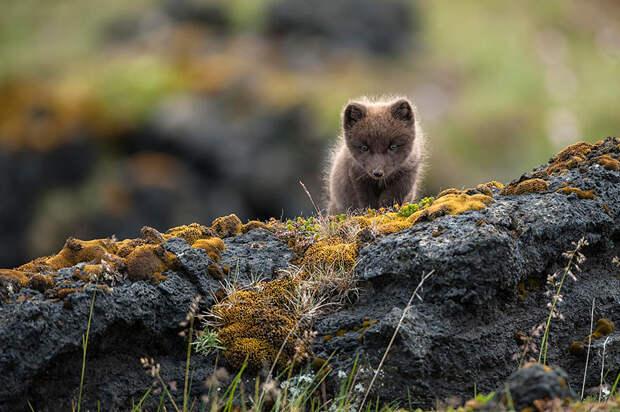 Путешествие в Исландию - 37 фотографий природы-61