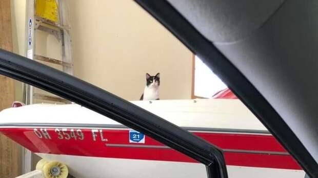 кошка в гараже