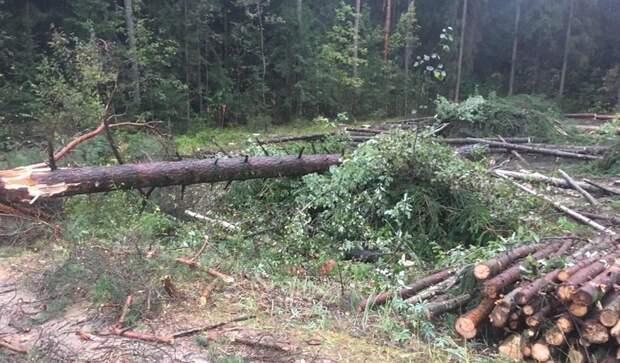 Мужчину насмерть придавило деревом в Удмуртии
