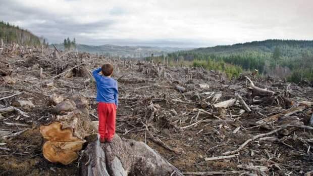 Китайцы ускоряют вырубку сибирской тайги, скоро реликтовые леса перестанут существовать