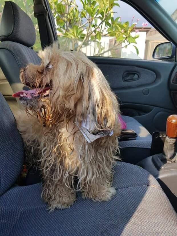 Мужчина спас собаку, на шее которой обнаружил записку, в которой была написана его грустная история