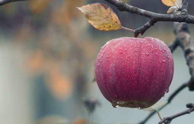 Нутрициолог Мирошников перечислил снижающие давление продукты