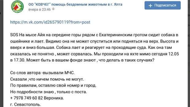 Когда в сердце есть место доброте: крымчане спасли застрявшую на мысе Айя собаку