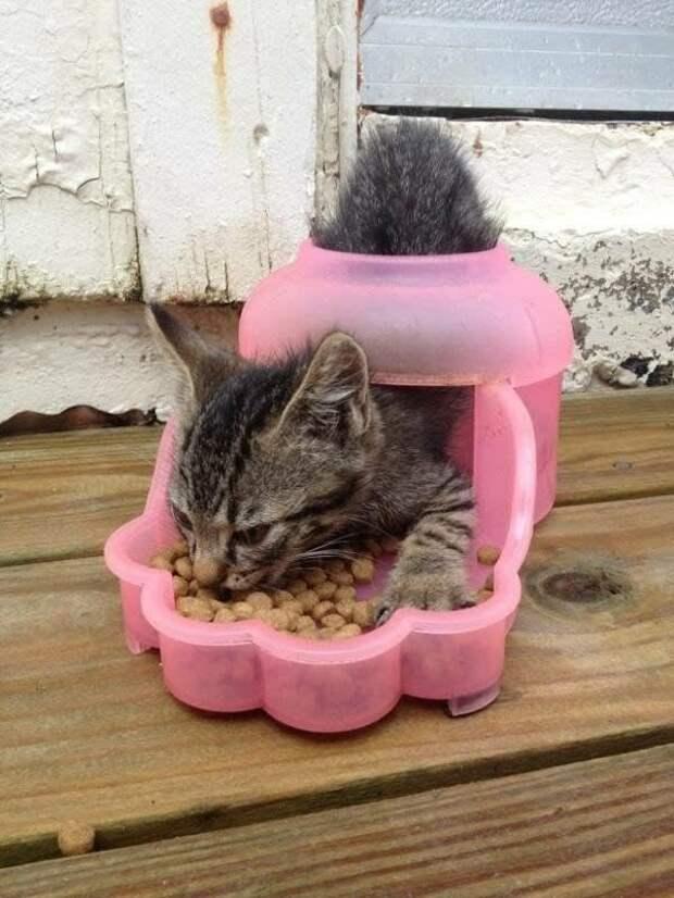 4. И кормушку использовать по своему усмотрению Кошка в доме, домашние животные, забавные фото с котами., кошка, кошки, фото кошек, хозяева животные, юмор