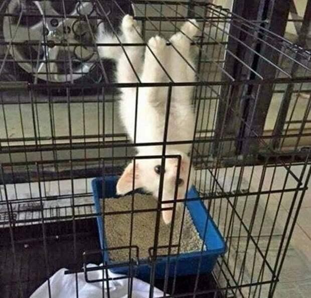 Кот-летучая мышь