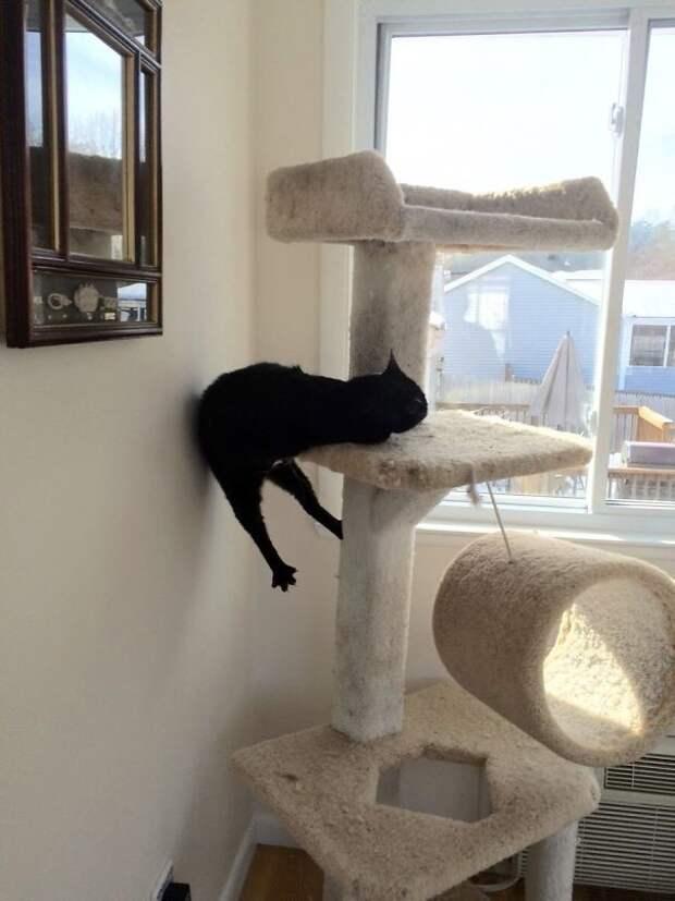 Феликс обалдел животные, забавно, изменение сознания, кошачья мята, кошки, растения, смешно, фото