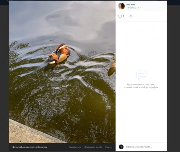 Фото дня: краснокнижную мандаринку заметили в Алтуфьеве