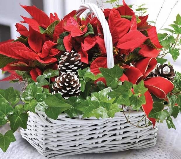 Как за минуту сделать красивую новогоднюю пуансеттию