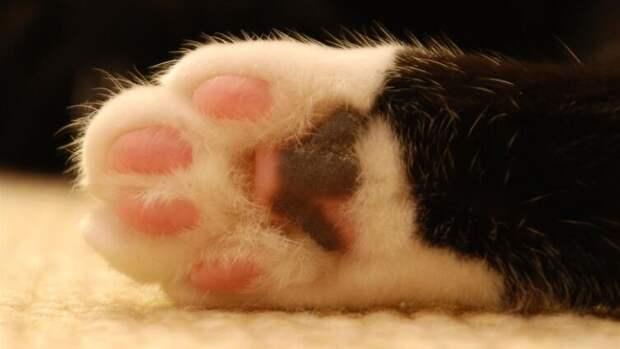 Что такое операция «Мягкие лапки» в ветеринарии?