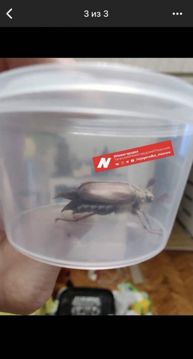 Житель Нижегородского спутал майского жука с иноземной формой жизни