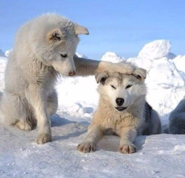Веселые и позитивные животные для поднятия настроения (10 фото)