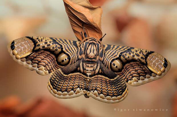 caterpillar-moth-butterfly-before-after-metamorphosis-1-2