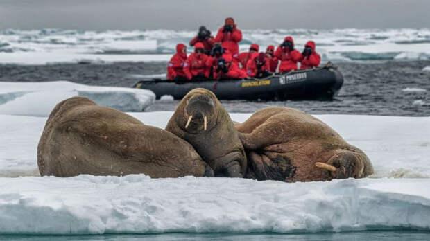 Работу России в Арктике пытаются ограничить
