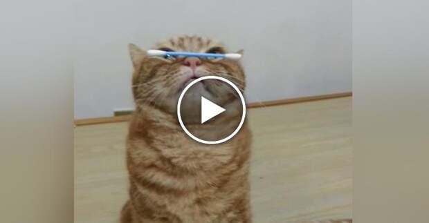 Кот - бог самоконтроля