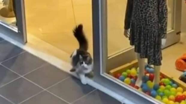 Парень видел, что кошка что-то завороженно рассматривает в витрине магазина. Через минуту она уже была внутри