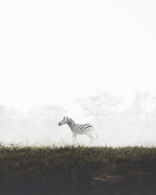 Когда дикая природа вызывает восторг. Фотограф Донал Бойд 15