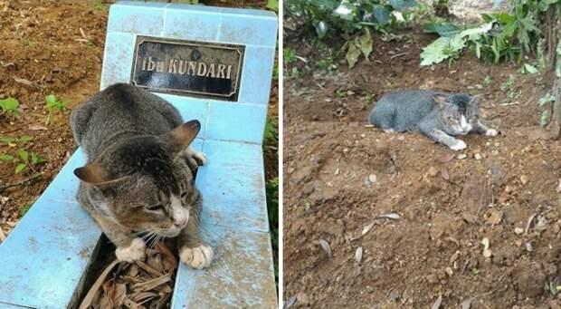 Её кошачье сердце разрывалось на части… Горюющая кошка целый год живет на могиле своей хозяйки